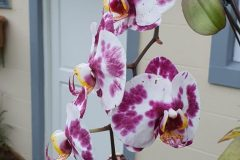 Orchids in Spring